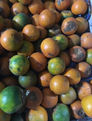 Lulo Fruit in Colombia