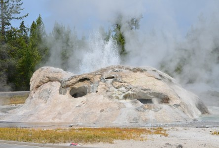 Grotto Geyser at the Upper Geyser Basin in Yellowstone National Park, Wyoming