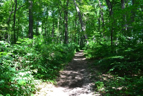 The Pinery on Trail #10 at Indiana Dunes State Park