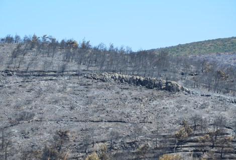 Aftermath of 2012 fires near Olympi, Chios, Greece