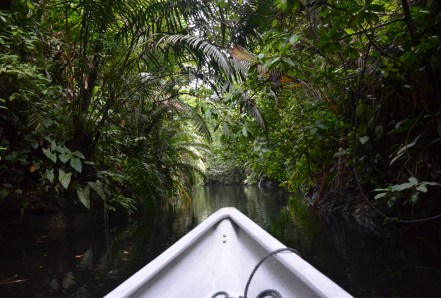 A boat ride through the jungle at Parque Nacional Natural Uramba Bahía Málaga in Colombia