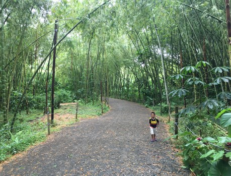 Bamboo forest at Bioparque Ukumarí in Risaralda, Colombia