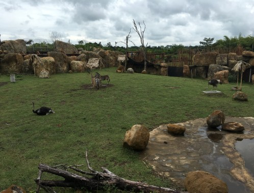 African Savanna at Bioparque Ukumarí in Risaralda, Colombia