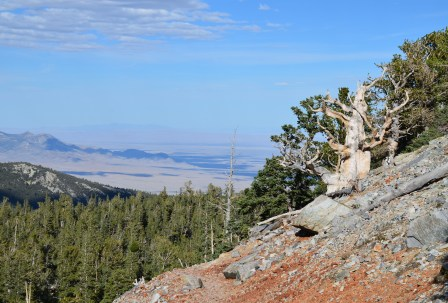 Bristlecone Pine Trail at Great Basin National Park, Nevada