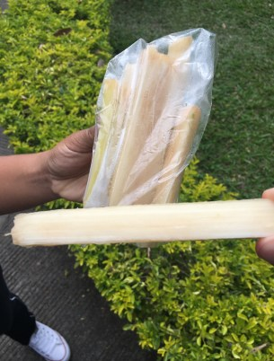 Sugar cane at Museo de la Caña in Valle del Cauca, Colombia