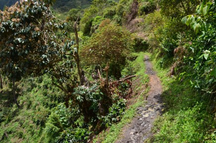 The trail to El Duende at Tierradentro, Cauca, Colombia