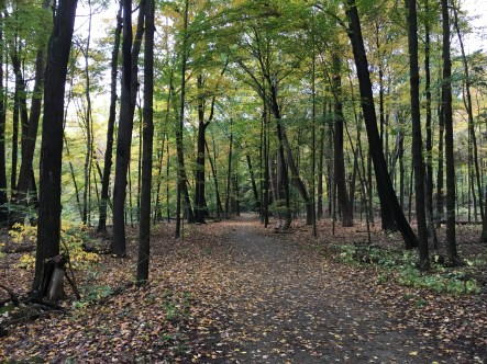 East Cohasset Trail at Mill Creek Park in Youngstown, Ohio