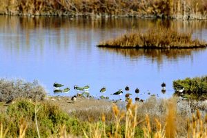 Nomadic_Marjal_Moro_Birding-min-scaled