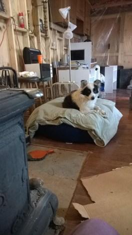 Eureka enjoying fireside luxury