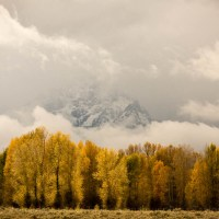 Golden Autumn in Grand Teton National Park