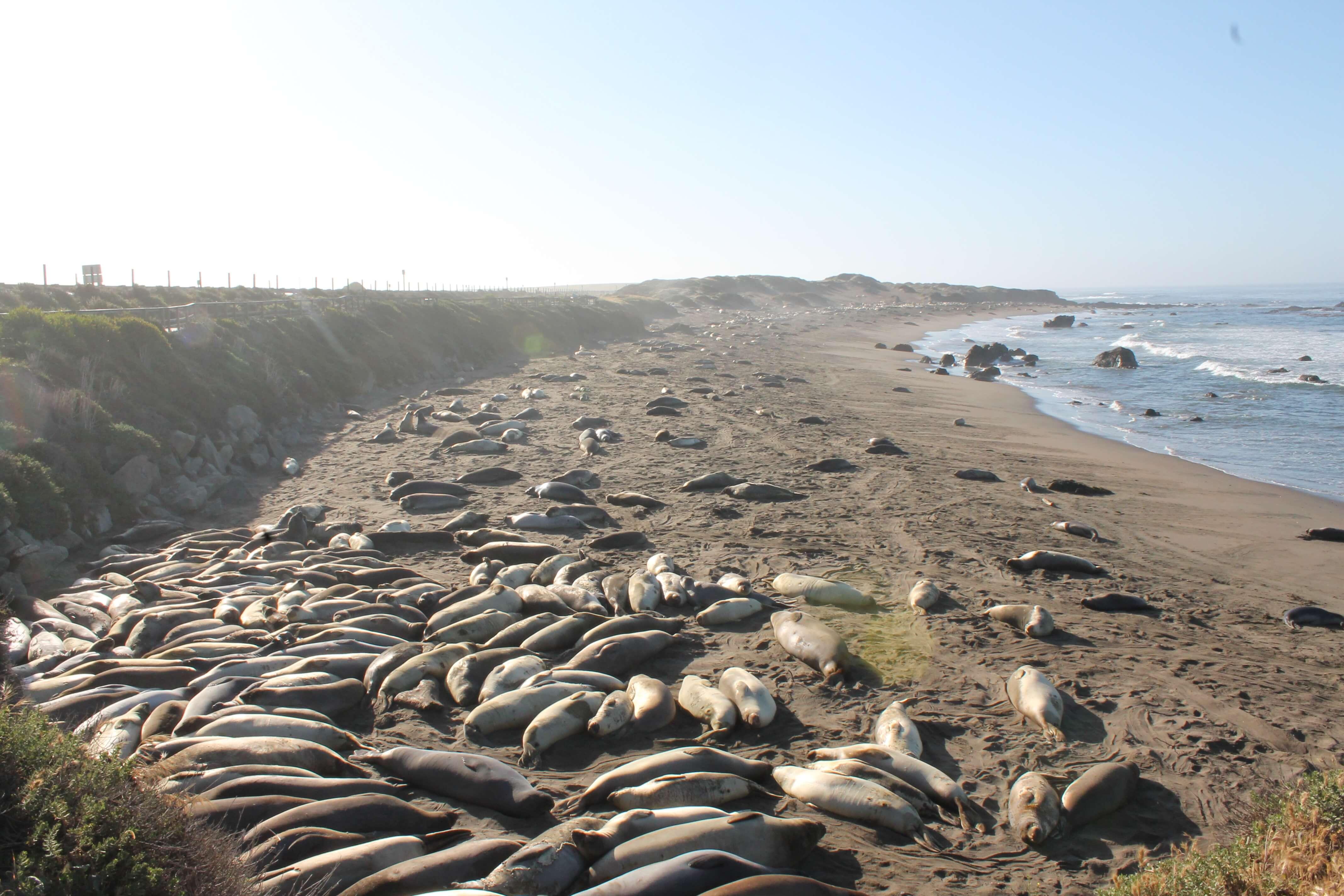 San Diego to Big Sur Road Trip: Seal Beach