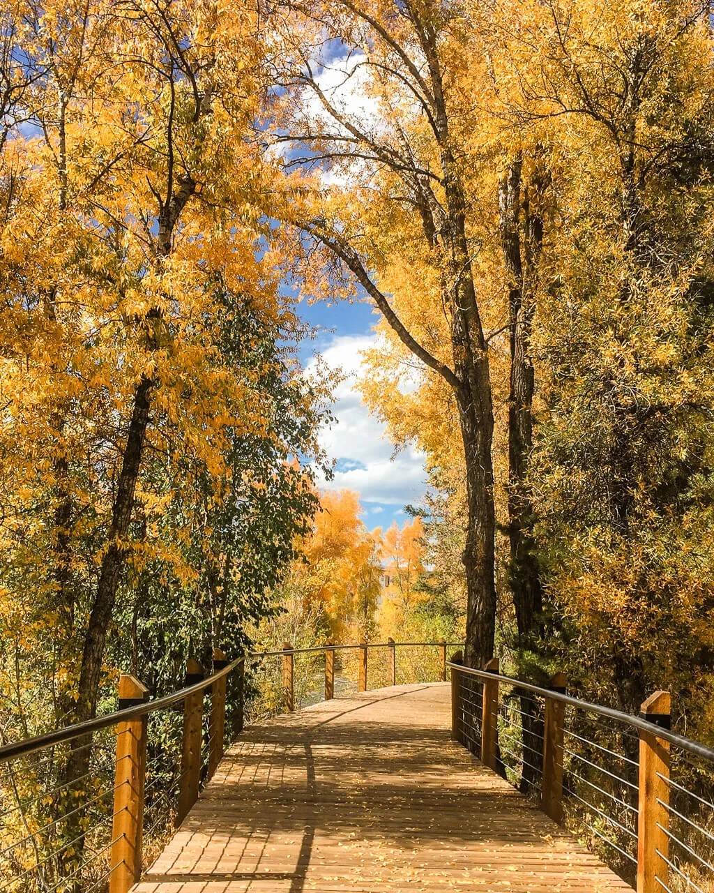 Exploring the Blue River Bike Path in Silverthorne, Things to Do