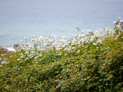 Sea the daisies