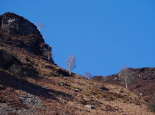 Bare trees and rocky hills