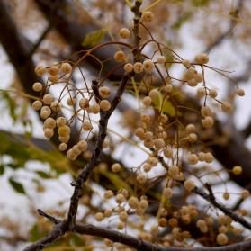 Andalusian autumn