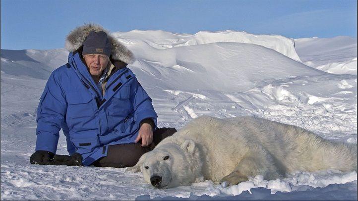 David-Attenborough-polar-bear