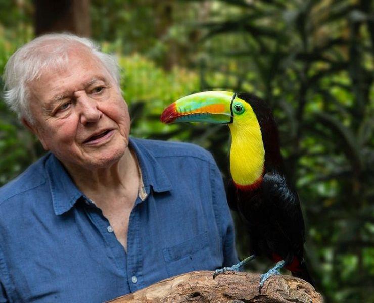 Ten Best David Attenborough Documentaries