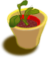 Plant In Two Pots
