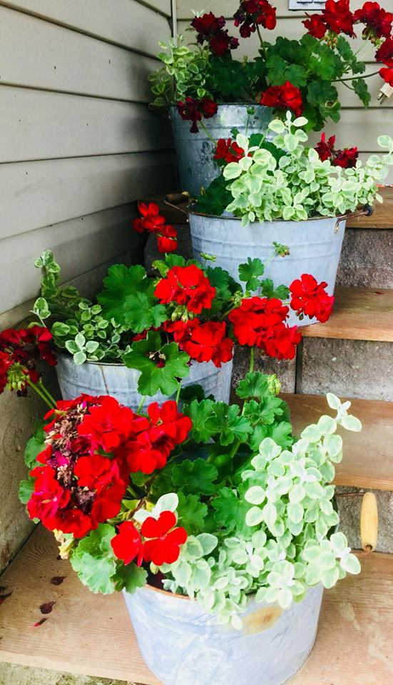 aging galvanized pails