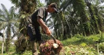 daftarkan Kesejahteraan Petani di Antara Dana Sawit dan Biodiesel