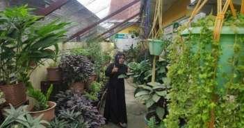 Jeli Adalah Kunci, CV Marifah Herbal Makin Berkembang di Tengah Pandemi