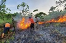 Sehari, 2 Kebakaran Besar di PPU; 3 Hektare Hutan Terbakar, 5 Rumah Jadi Arang