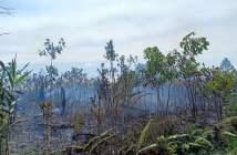 1 Hektare Lahan di Kariangau Terbakar, Diduga Akibat Cuaca Panas