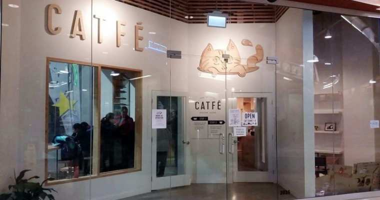 Catfe Vancouver | Cat Lovers Cafe