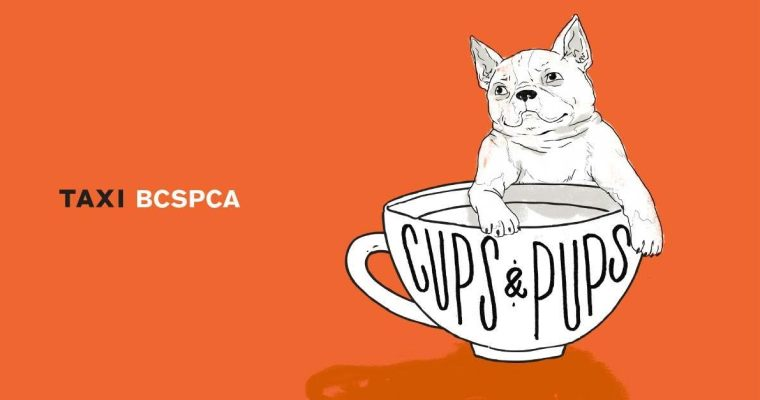 Pop Up Dog Cafe opens in Vancouver | August 5th Puppy Adoption