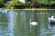Hyde Park : O Maior Parque de Londres