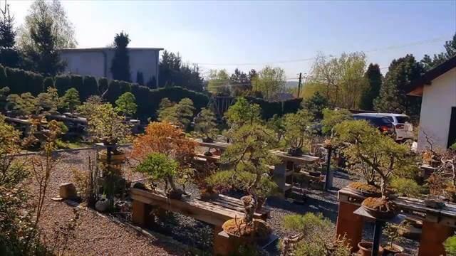 ポーランド 盆栽 庭