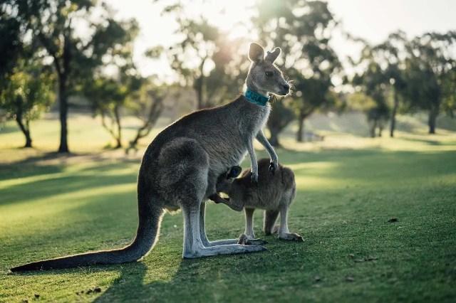 The Big Australian Bucket List