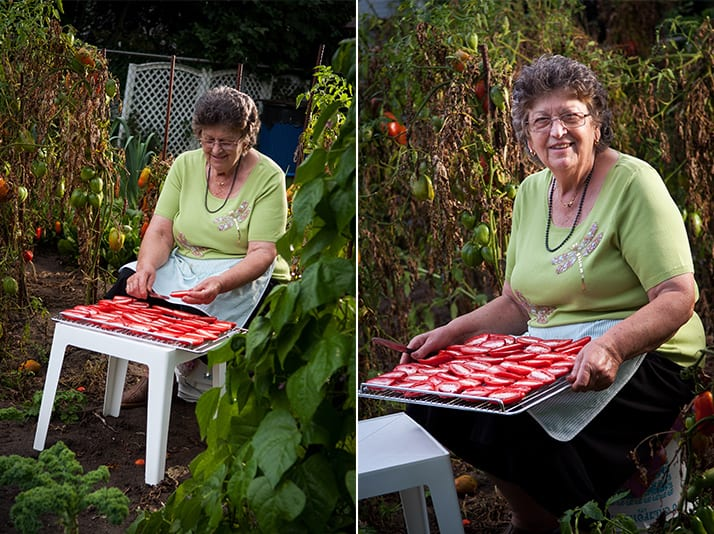 sundrying tomatoes in the garden