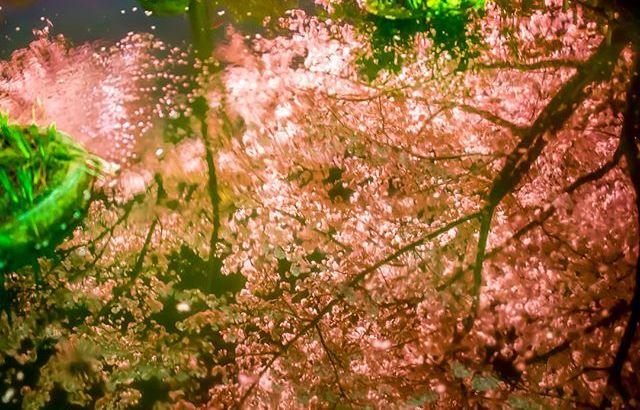 「桜の花の紅茶王子」山田南平 感想②