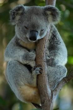 australia-699228_640pd