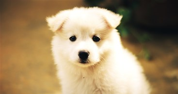 dog-1443465_960_720