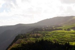 The Azores is known for tea plantations.