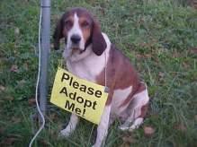 hounddog2