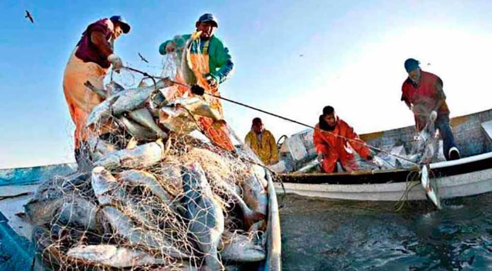 """Federpesca: """"Garantire alle imprese di pesca una adeguata liquidità"""""""