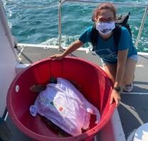 Toscana, ritorna in mare la tartaruga curata al Centro Tartanet di Talamone