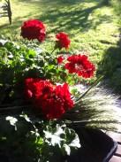 Giardino d'Agosto