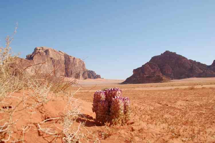 I fiori del deserto