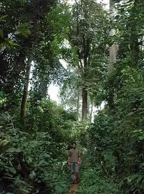 Nella foresta equatoriale