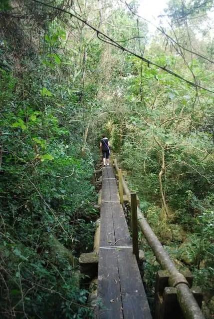 Un gita nella giungla