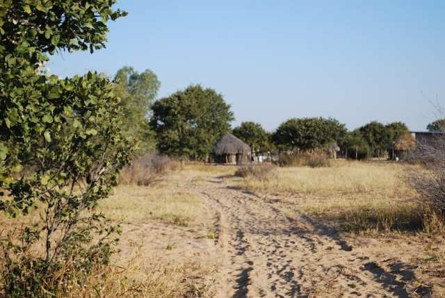 Sabbia e capanne di legno nel Kalahari