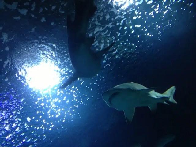 La fauna marina dell'Oceanografic