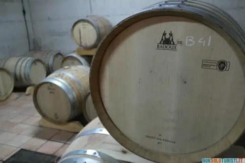 L'azienda vinicola Fontefico