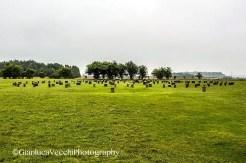 Woodhenge - Inghilterra (Regno Unito)