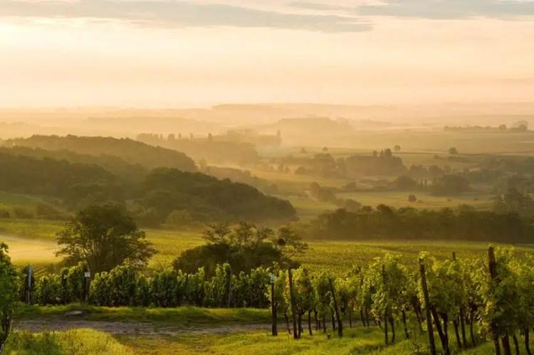 Alba sulle vigne del Palatinato, Germania