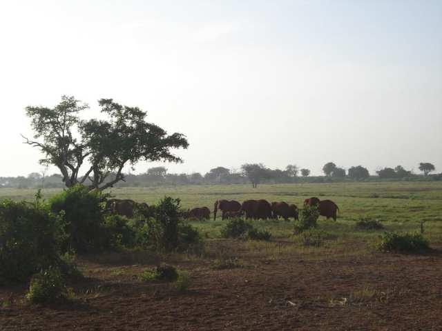 Elefanti, Parco Nazionale dello Tsavo - Kenya
